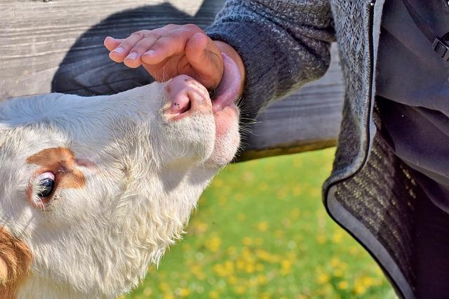 Quand l'élevage a le «gaz» en poupe…